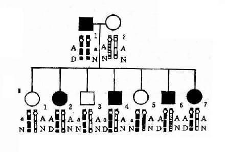 致病基因与标记位点的边锁关系图