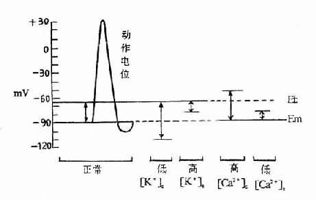 细胞外液K+、Ca2+浓度和正常骨骼肌静息膜电位(Em)与阈电位(Et)的关系