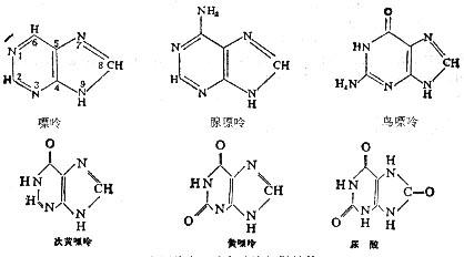 嘌呤碱的化学结构