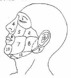 颌面部分区