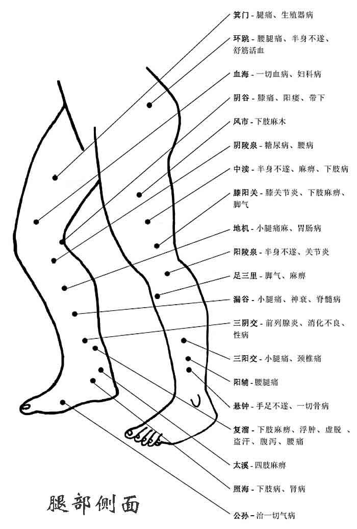腿部侧面穴位和穴位功能