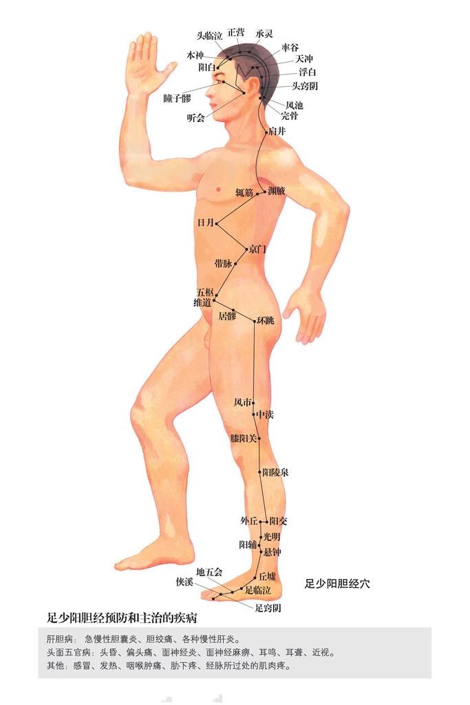 足少阳胆经穴位图