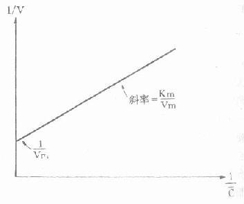双倒数法求算非线性动力学消除的Vm和Km示意图