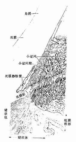巩膜静脉窦与小梁网结构立体模式图