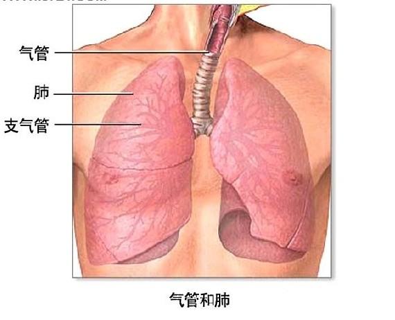 慢性支气管炎.jpg