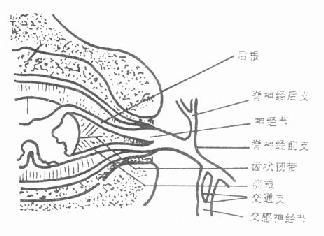 脊神经根的构成