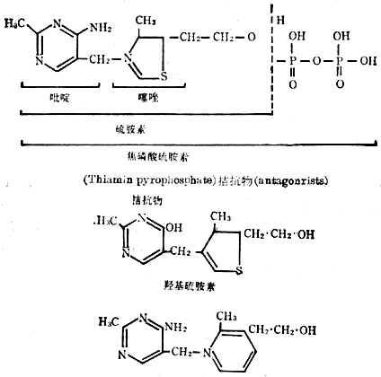 硫胺素、硫胺素焦磷酸盐及硫胺素拮抗物