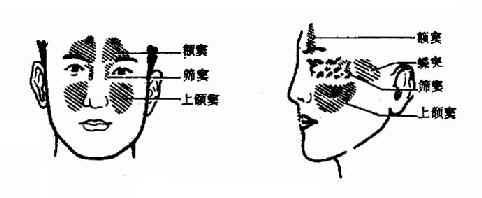 鼻窦面部的投影