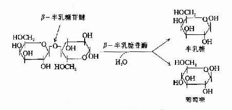 β-半乳糖苷酶的作用