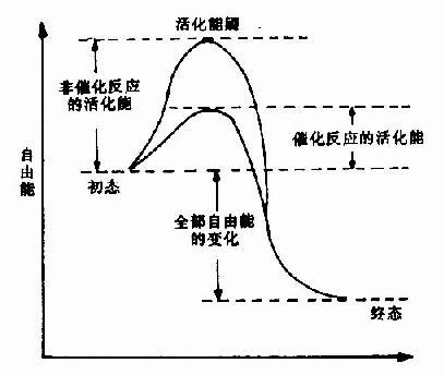 非催化过程和催化过程自由能的变化