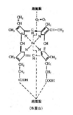 亞鐵血紅素結構式