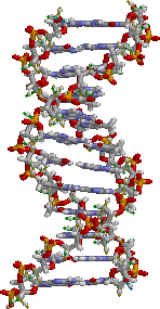 文件:ADN static.png