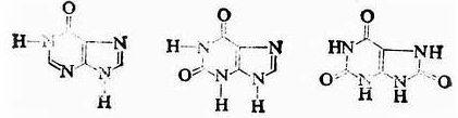 次黄嘌呤黄嘌呤尿酸