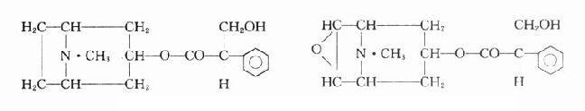 阿托品及东莨菪碱的化学结构