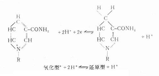 含有烟酸的一些辅酶的氢受体的功能