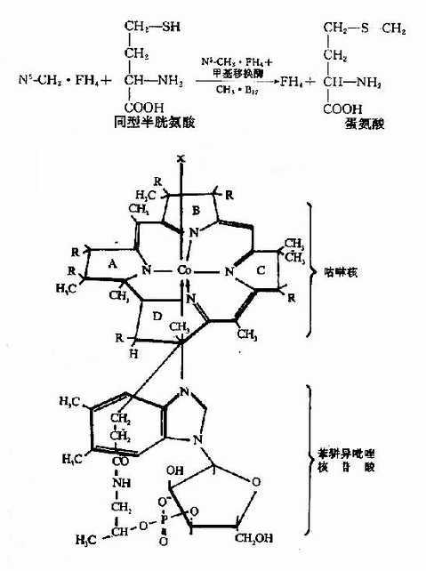 维生素B12的结构