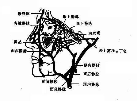 外鼻静脉与海绵窦的关系