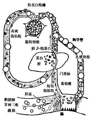 乳糜微粒和VLDL代谢略图
