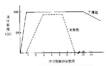 T、B 细胞发生耐受的不同特征