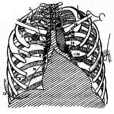 胸壁的软组织及骨骼部分可能诊断错误的情况