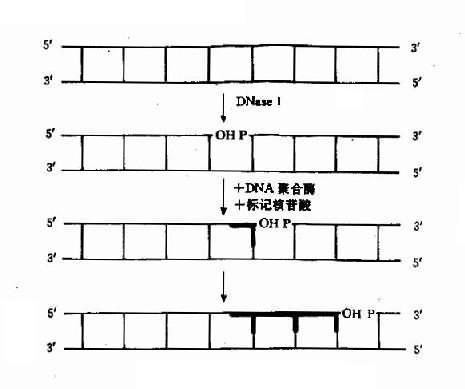 缺口平移标记法粗线示标记部分