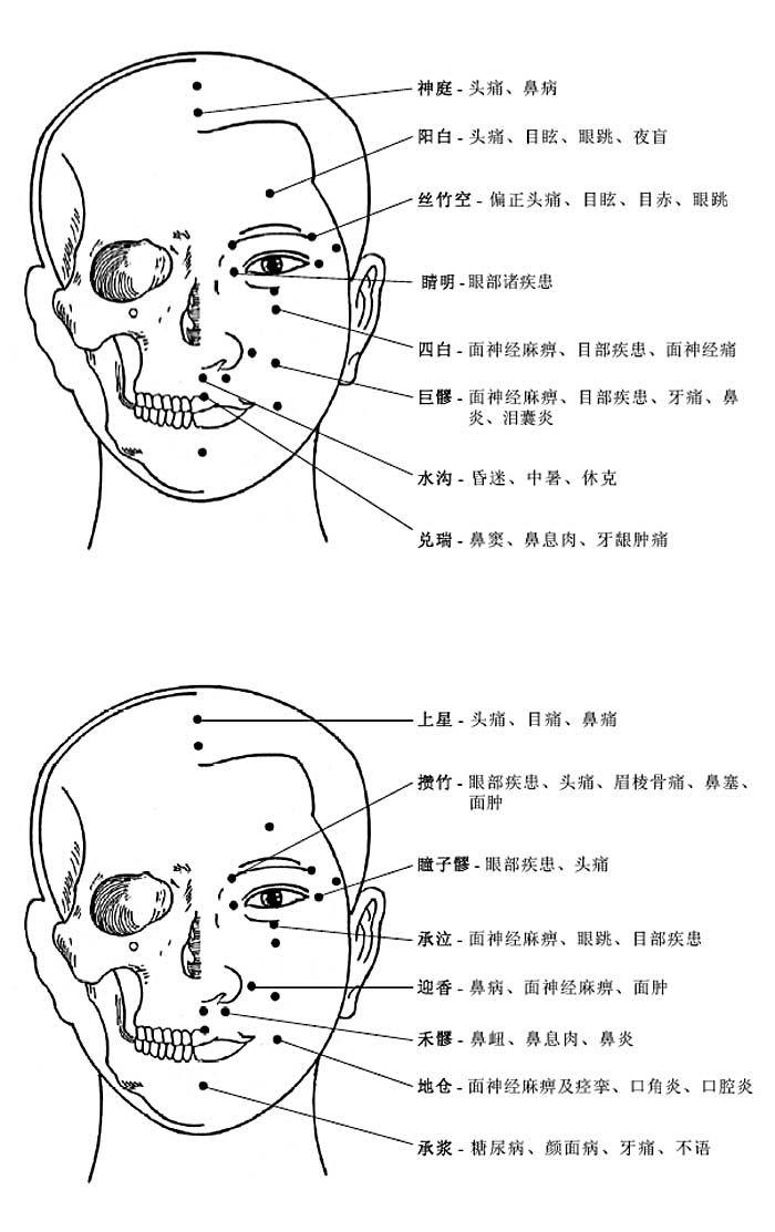 头部穴位和穴位功能