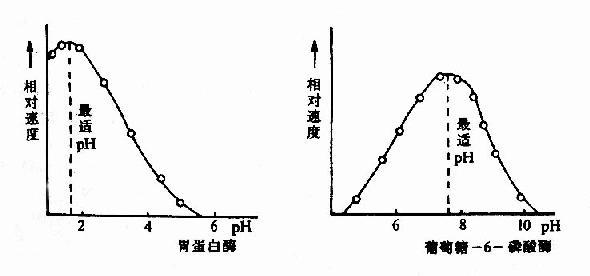 胃蛋白酶和葡萄糖-6-磷酸酶的pH活性曲线