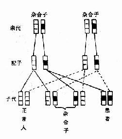常染色体显性遗传的传递方式-隐性遗传