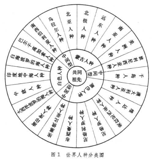 世界人种分类图.jpg
