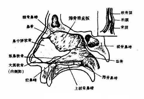 鼻中隔支架