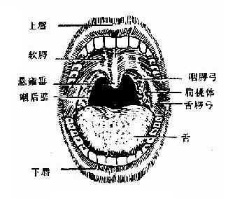 口咽部检查所见