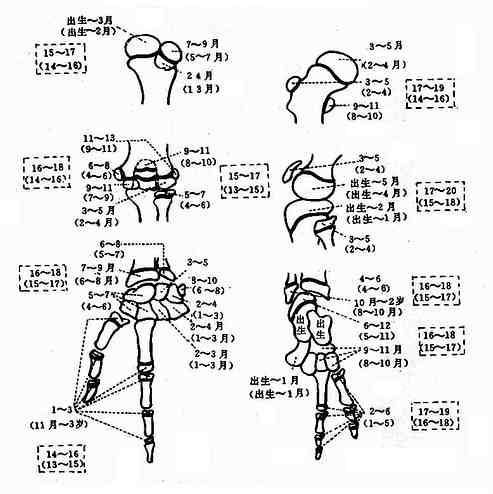 天津地区国人四肢骨龄正常标准