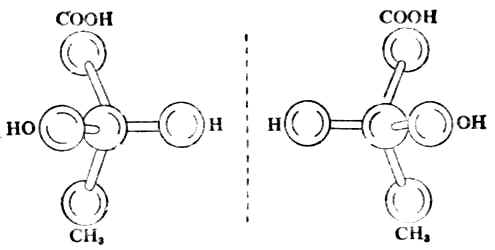 (+)-乳酸及(-)-乳酸的球棒模型