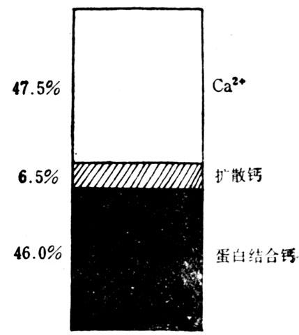 正常人血浆钙的状态