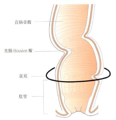 直肠及肛管截面观