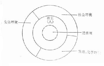 人与环境相互作用的轮状模型