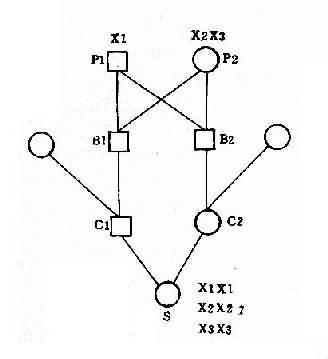 姑表兄妹婚配中X连锁基因传递图解