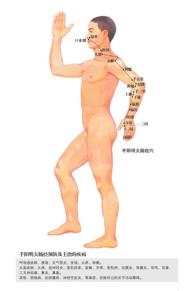 手阳明大肠经穴位图