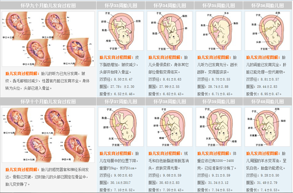 28周的胎儿发育情况 孕25周到28周注意事项图片