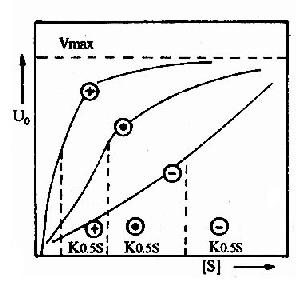 变构酶的底物活性曲线