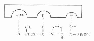 卡托普利与酶的活性部位结合图
