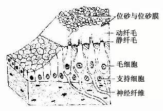 斑结构模式图