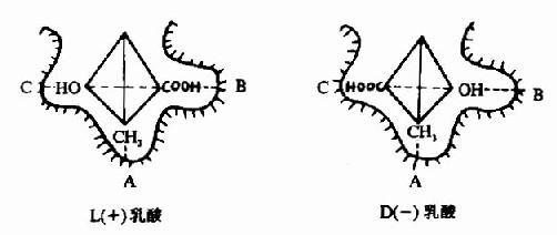 乳酸脱氢酶的立体异构特异性