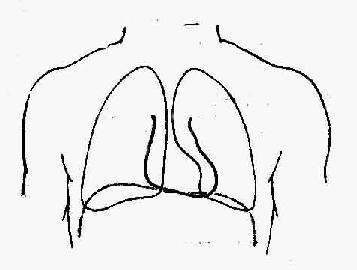 心脏边界与肺脏重叠关系示意图