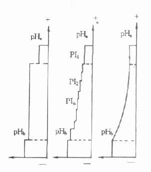 pH梯度形成示意图