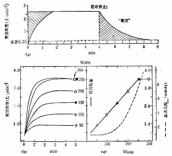 不同强度运动的氧耗量变化过程图解