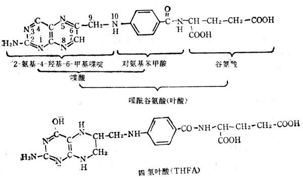 叶酸和四氢叶酸的结构式