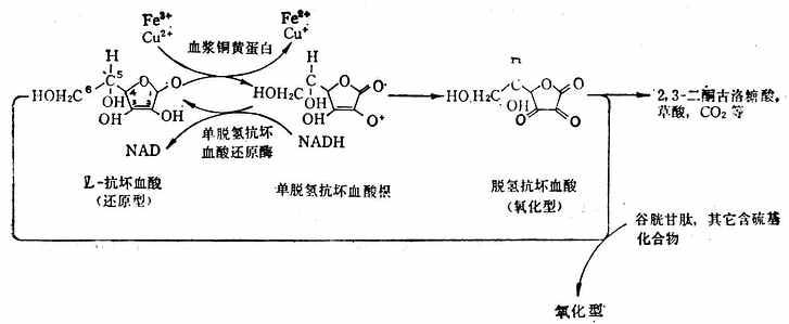 抗坏血酸的氧化还原反应