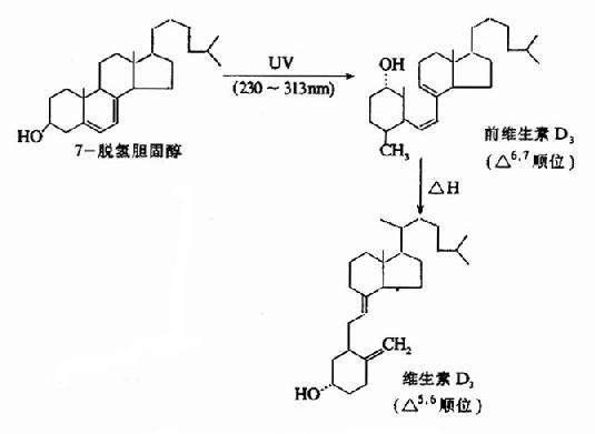 维生素D3的生成