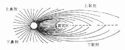 视网膜神经纤维分布示意图